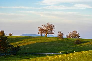 Blooming fields in spring at sunset, Mount Petrano, Marche, Italy, Europe