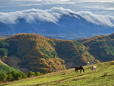 Horses grazing by Apennine Mountains in Italy, Europe
