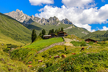 Italy, South Tyrol, Dolomites, Aurina Valley, Cows and mountain hut in Summer