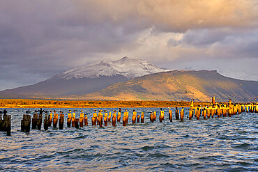 Pier at sunrise, Puerto Natales, Torres del Paine National Park, Ultima Esperanza Province, Magallanes and Chilean Antactica Region, Patagonia, Chile, South America