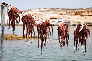 Drying Octopus, Mandrakia, Milos, Cyclades, Aegean Sea, Greek Islands, Greece, Europe