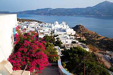 Old white town of Plaka and Milos Bay with colourful bougainvillea, Plaka, Milos, Cyclades, Aegean Sea, Greek Islands, Greece, Europe