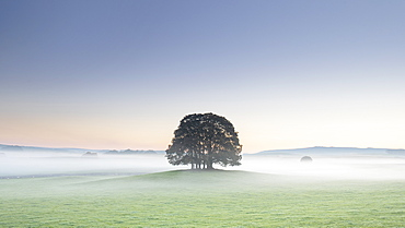 Copse of trees and low lying mist at Airton near Malham, Malhamdale, Yorkshire Dales, Yorkshire, England, United Kingdom, Europe