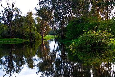 Yellow Water Billabong, Kakadu National Park, UNESCO World Heritage Site, Northern Territory, Australia, Pacific