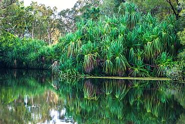 Yellow Water billabong and wetland, Kakadu National Park, UNESCO World Heritage Site, Northern Territory, Australia, Pacific