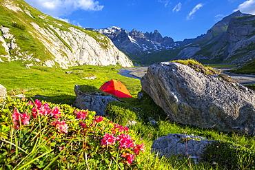 The sun illuminates a red tent, Unterer Segnesboden, Flims, District of Imboden, Canton of Grisons (Graubunden), Switzerland, Europe