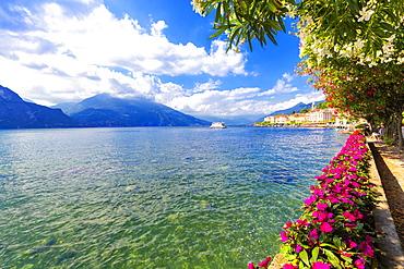 Flowers on the lakeside of Bellagio, Province of Como, Lake Como, Italian Lakes, Lombardy, Italy, Europe