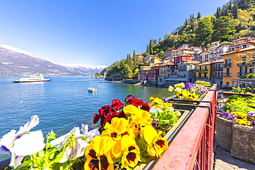 Colourful flowers by the lake, Varenna, Province of Lecco, Lake Como, Italian Lakes, Lombardy, Italy, Europe