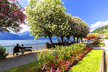 Blooms on the lake side of Bellagio, Province of Como, Lake Como, Italian Lakes, Lombardy, Italy, Europe