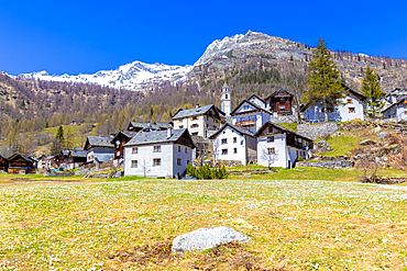 Spring at the village of Bosco Gurin, Vallemaggia, Canton of Ticino, Switzerland, Europe