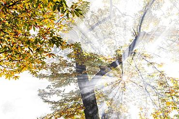 Sun rays filter between fog in autumn, Soglio, Bregaglia valley, Graubunden, Switzerland, Europe