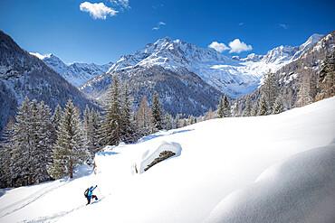 Young skier advances in the fresh snow, Chiareggio, Valmalenco, Valtellina, Lombardy, Italy, Europe - 1269-664