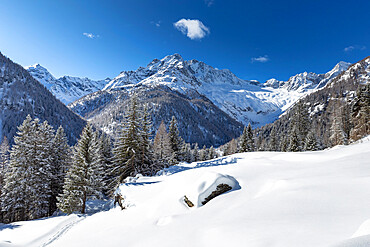 Winter landscape after snowfall with view of the group of Disgrazia, Chiareggio, Valmalenco, Valtellina, Lombardy, Italy, Europe