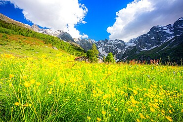 Ancient group of huts between summer flowers, Val d'Arigna, Valtellina, Orobie Alps, Lombardy, Italy, Europe