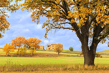 Isolated cottage in the Tuscan countryside during autumn, Asciano, Val d'Orcia, UNESCO World Heritage Site, Siena province, Tuscany, Italy, Europe