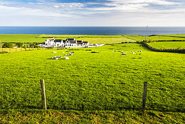 Countryside on the Antrim Coast, Country Antrim, Ulster, Northern Ireland, United Kingdom, Europe