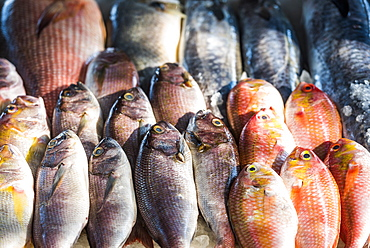 Fish for sale at a food market in Fort Kochi (Cochin), Kerala, India, Asia