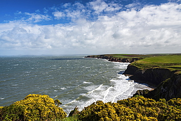 Pembrokeshire Coast National Park, seen near Marloes and St. Brides, Wales, United Kingdom, Europe