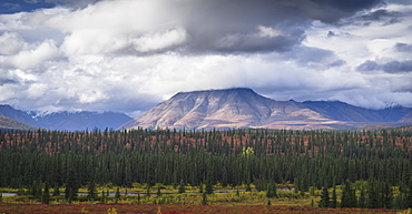 Mountain and forest landscape in Denali National Park, Alaska, United States of America, North America