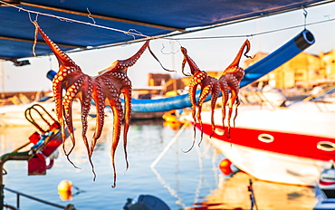 Octopuses hung up to dry on washing lines, Chania, Crete, Greek Islands, Greece, Europe