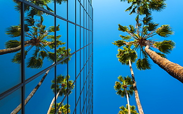 Palm trees and glass building, worm's-eye view, Hollywood, Los Angeles, California, United States of America, North America