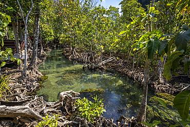 Tha Pom Klong Song Nam National Park, Krabi Province, Thailand, Southeast Asia, Asia