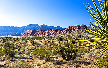 View of rock formations and flora in Red Rock Canyon National Recreation Area, Las Vegas, Nevada, United States of America, North America