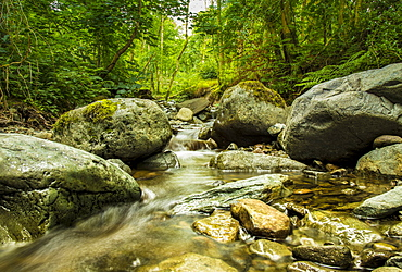 Brockle Beck, Springs Wood, near Keswick, Lake District, UNESCO World Heritage Site, Cumbria, England, United Kingdom, Europe