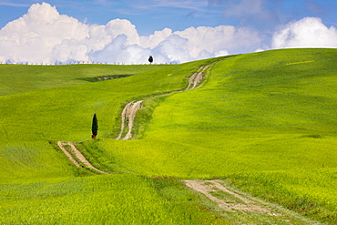 Green fields, Cypress trees and blue sky in Val d'Orcia, UNESCO World Heritage Site, Tuscany, Italy, Europe