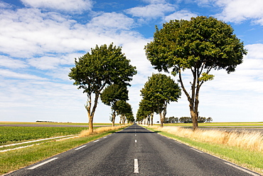 A straight section of the Liberty Road (La Voie de la Liberte) on a sunny day with blue skies, near Reims, France, Europe