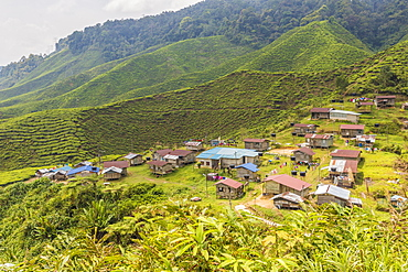 A local village amongst tea plantations in Cameron Highlands, Pahang, Malaysia, Southeast Asia, Asia