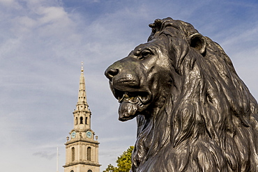 Lion and St. Martins in the Fields church in the background in Trafalgar Square, London, England, United Kingdom, Europe