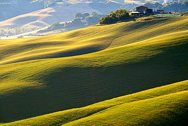 Tuscan Hills, Asciano, Tuscany, Italy, Europe
