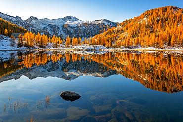 Autumn mirror at San Giuliano lake, Dolomiti di Brenta Natural Park, Dolomites, Trentino-Alto Adige, Italy, Europe