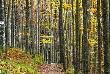 Autumn in Tosco Emiliano Apennines, Apuan Alps, Lizzano in Belvedere, Emilia Romagna, Italy, Europe