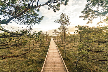 Lahemaa National Park early in the morning in autumn, northern Estonia, Europe