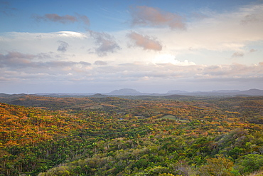 The forest of Cuba at sunset, Havana district, Cuba, West Indies, Caribbean, Central America