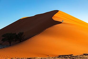 Drone shot of model Climbing Dune 13 at sunrise, Sossusvlei, Namibia, Africa