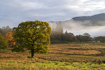 Autumn scene with early morning mist in autumn, Borrowdale, Lake District National Park, UNESCO World Heritage Site, Cumbria, England, United Kingdom, Europe