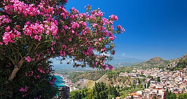 Panoramic view over the town from the Greek Theatre, pink oleander bush in foreground, Taormina, Messina, Sicily, Italy, Mediterranean, Europe
