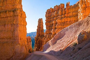 High cliffs towering above the Navajo Loop Trail below Sunset Point, Bryce Canyon National Park, Utah, United States of America, North America