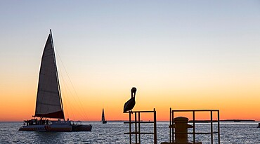 View across the Gulf of Mexico, sunset, brown pelican prominent, Mallory Square, Old Town, Key West, Florida Keys, Florida, United States of America, North America