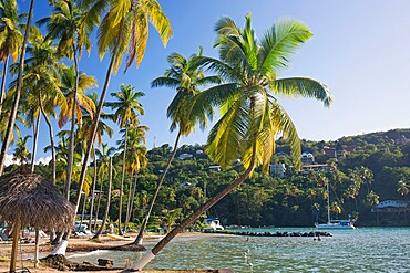 Coconut palms at the water's edge, LaBas Beach, Marigot Bay, Castries, St. Lucia, Windward Islands, Lesser Antilles, West Indies, Caribbean, Central America