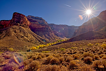 Bright Angel Canyon viewed north of the south rim with bright yellow trees in the bottom of the canyon (Indian Gardens), Grand Canyon National Park, UNESCO World Heritage Site, Arizona, United States of America, North America