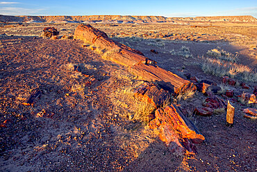 The Giant Petrified Logs of Petrified Forest National Park, located along a trail behind the Rainbow Museum, Arizona, United States of America, North America