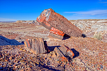 Large pieces of petrified wood in the Jasper Forest of Petrified Forest National Park, Arizona, United States of America, North America