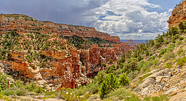 Grand Canyon North Rim from the end of the Cliff Spring Trail near Cape Royal, Arizona, United States of America, North America