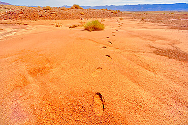 Human Footprints in soft sand near the Upper Soap Creek Bench in the Vermilion Cliffs National Monument Arizona.