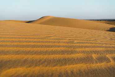 Sand dunes in the Thar Desert, Jaisalmer, Rajasthan, India, Asia