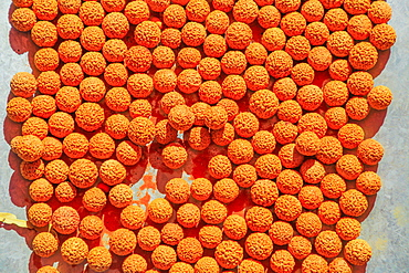 Dried Quandong Seeds (Santalum acuminatum) (quandong of the desert), Australian bush food eaten by Australian aborigines, Northern Territory, Australia, Pacific